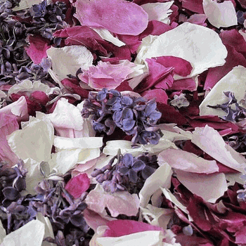 Peony and Lilac Petal Blend
