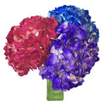 Airbrushed Jewel Toned Hydrangea Flowers