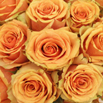 Azafran Orange Rose