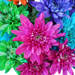 Farm Mix Cushion Bulk Flower