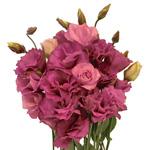 Raspberry Pink Lisianthus Flower