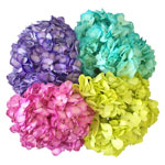 Enhanced Hydrangea Party Pack