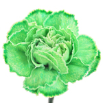 Green Carnation Flower Tinted