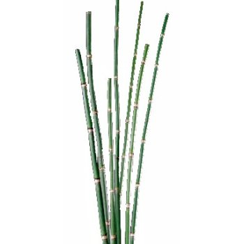 Horsetail Green Bulk Flower