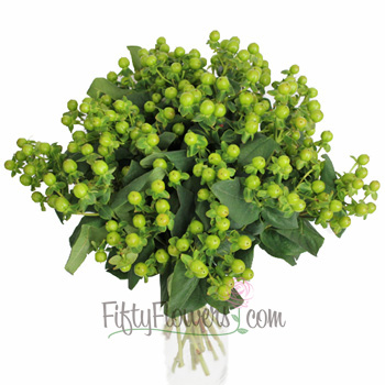Magical Green Power Hypericum Berries