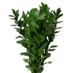 Israeli Ruscus Green Filler Flower