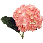 Hydrangea Light Pink Spray Tinted