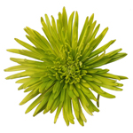 Vintage Moss Green Airbrushed Spider Mum
