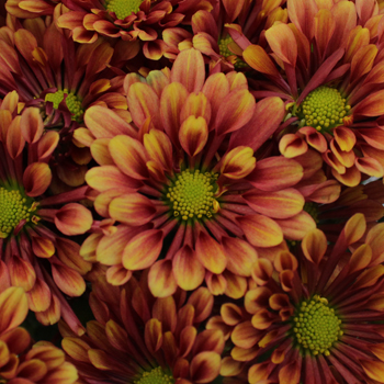 Burgundy and Yellow Novelty Flower