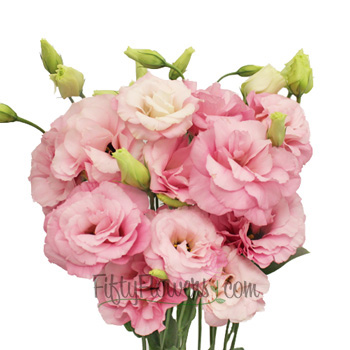 Lisianthus Medium Pink Flower