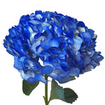 Royal Blue Airbrushed Hydrangea Flower