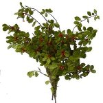 St. Augustine Holly Christmas Green Filler Flower