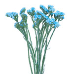 Statice Flower Malibu Blue Tinted