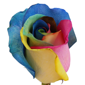 Tie dye rainbow roses for How to make tie dye roses