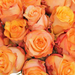 Twilight Light Orange Rose