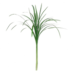 Lily Grass Green Filler Flower