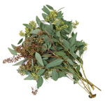 Willow Seeded Eucalyptus Flower March 15 to August Delivery