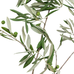 Fresh Cut Olive Branches Wholesale